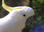 research:topics:image-based_3d_reconstruction:cockatoo.png