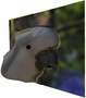 research:topics:image-based_3d_reconstruction:cockatoo_recon.png